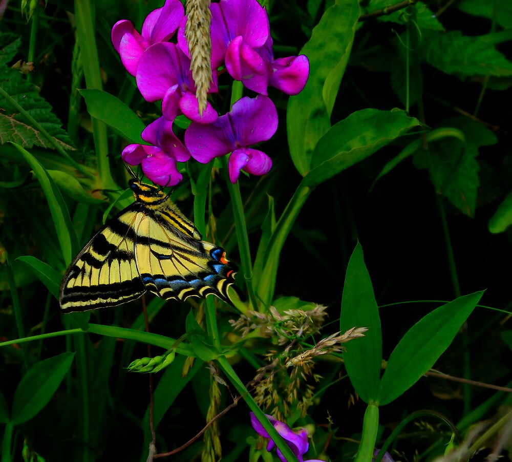 Lets Just Hang-Out ~ Butterflies ~ by Charles & Patricia   Harkins ~ Picture Oregon