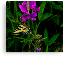 Lets Just Hang-Out ~ Butterflies ~ Canvas Print
