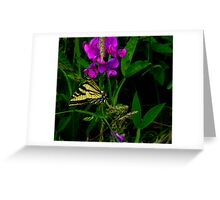 Lets Just Hang-Out ~ Butterflies ~ Greeting Card
