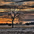 Sunset Tree by Leigh Monk