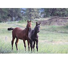 Horses on the Highway Photographic Print
