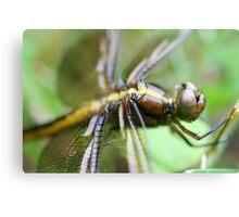 Dragon Fly  Macro Canvas Print