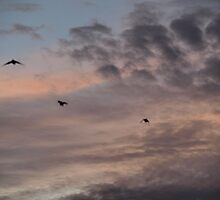 Birds at Evening Sky by shenlong