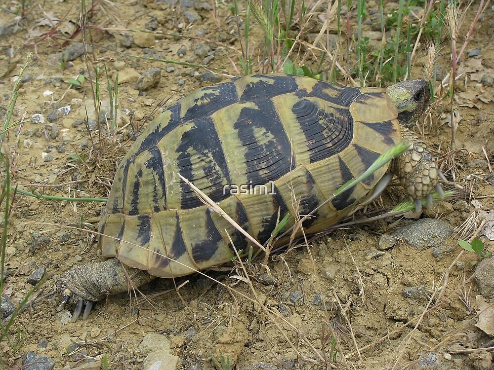 Kaplumbağa by rasim1