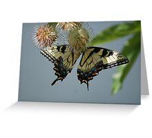 Yellow flutters..... Greeting Card