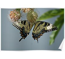 Yellow flutters..... Poster