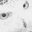 """Here's lookin' at you"" Snow owl drawn using a graphite medium. by iLovePencils"