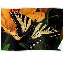Beautiful Tiger Swallowtail Poster