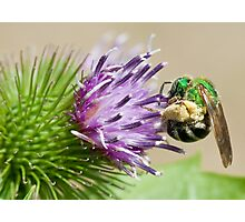 sweat bee Photographic Print