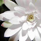 Flower of a very old Gymnocalycium Cactus Sparkles by Linda Gleisser