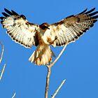 spread wide an landing by gene mcfarland