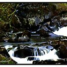 The Stream by Kevin Meldrum