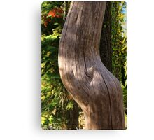 Pregnant Tree Canvas Print