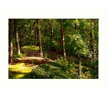 Sun Highlighted Woodlands Art Print