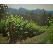 Walk in the Vineyard Photographic Print