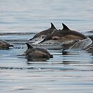 Common Dolphins by Jon Lees