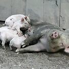 """""""This Little Piggy Went to Market"""" by BigD"""