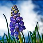 Young Hyacinth by J. David Peterson