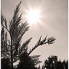 Young Tree, Old Sun by J. David Peterson
