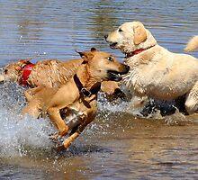 dog play,nothing like it by gene mcfarland