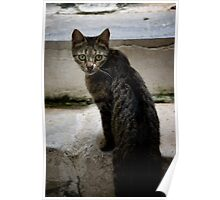 Cats of Greece 9 Poster