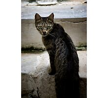 Cats of Greece 9 Photographic Print
