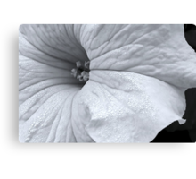 White Petunia in Black & White Canvas Print