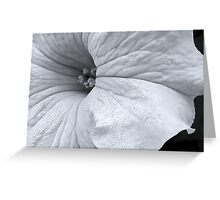 White Petunia in Black & White Greeting Card