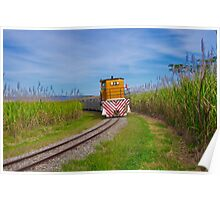 """Coming Through The Canefields"" Poster"