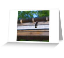 The Lightning Bug Greeting Card