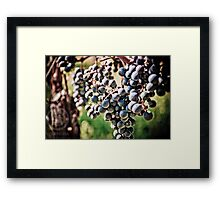 Grape Harvesting Framed Print