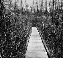 Labyrinth by RVogler