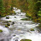 Sweet Creek by Chappy
