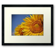 Summertime Blooms of Southern France Framed Print