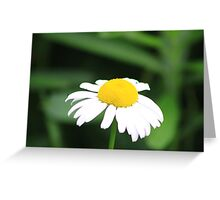 There's A Fly On My Daisy Greeting Card