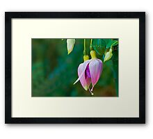 Fuchsia Buds Framed Print
