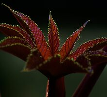 Delicate leaf (from my summer house) by Antanas