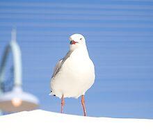 On Top of the World by Jennifer Saville
