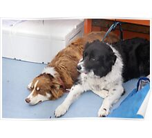 Dogs on the Ferry to Knoydart Poster