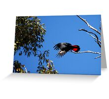 Black Red Tail I Greeting Card