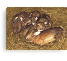 baby rabbits in thier nest art Canvas Print
