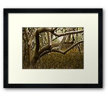 Wetlands at Lake Weyba Sunshine Coast Framed Print
