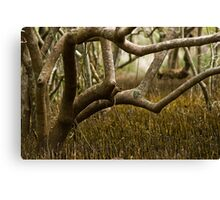 Wetlands at Lake Weyba Sunshine Coast Canvas Print