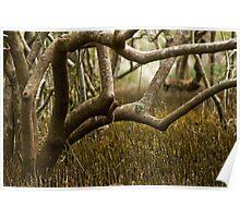 Wetlands at Lake Weyba Sunshine Coast Poster