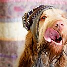 Orange & White Italian Spinone Dog Head Shot with Hat by heidiannemorris