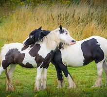 Horse Hug by Ralph Goldsmith