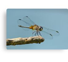 Blue Dasher on a Sunny Day Canvas Print