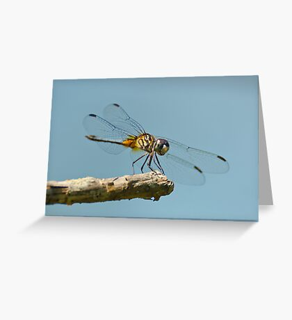 Blue Dasher on a Sunny Day Greeting Card