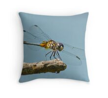 Blue Dasher on a Sunny Day Throw Pillow