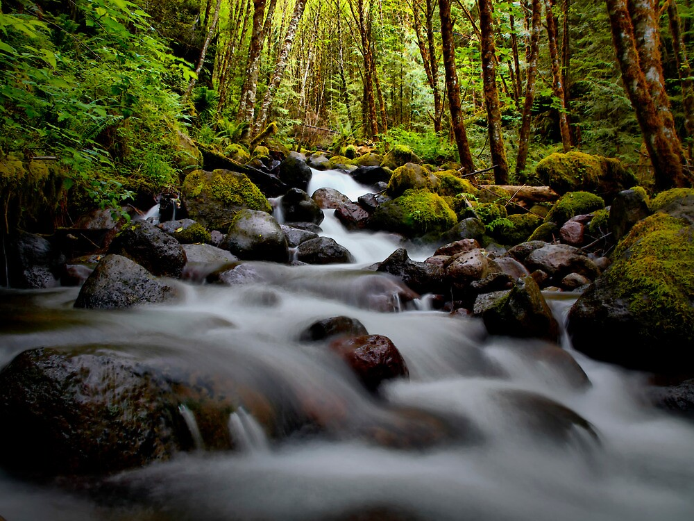 Just A Bit Of Love by Charles & Patricia   Harkins ~ Picture Oregon